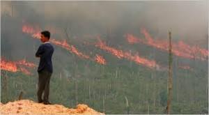 """Brandrodungen zur """"Landgewinnung"""" gefährden Menschen und Umwelt"""